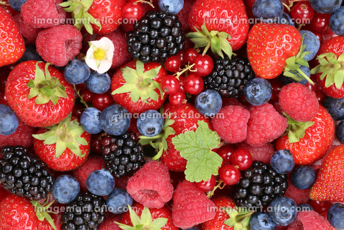 berries fruits background with strawberries,raspberries and blackberriesの販売画像