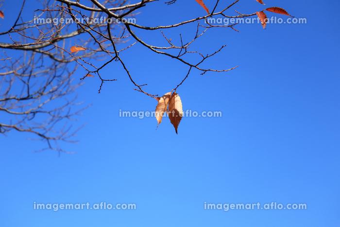 空と木 10 枝先に数枚残る枯れ葉の販売画像