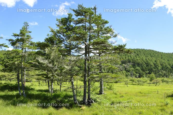 入笠山・登山道から眺めた夏山の風景(長野県・日本)の販売画像