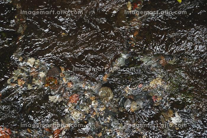 水面の販売画像