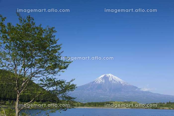 新緑の頃の田貫湖と富士山の販売画像