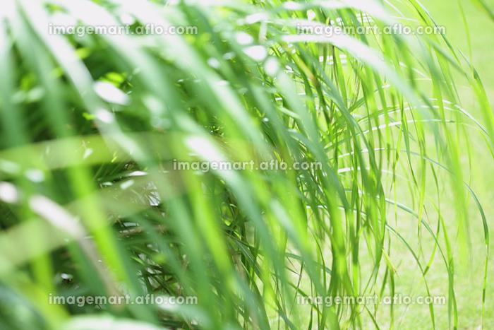 植物イメージの販売画像