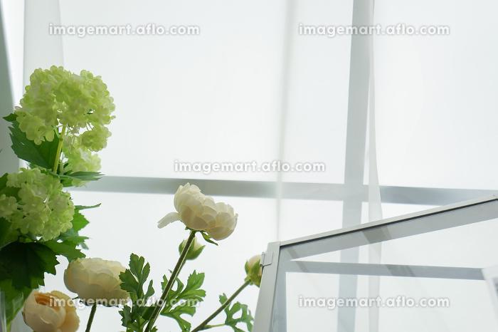 室内観葉植物イメージの販売画像