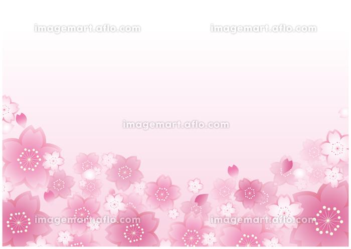 春の桜 植物 和風背景の販売画像
