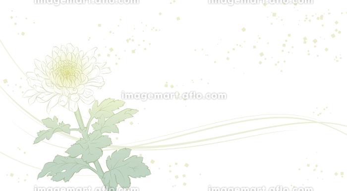 上品な菊の花の背景イラストの販売画像