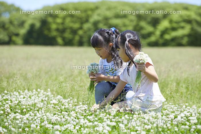 お花を摘む日本人の女の子の販売画像