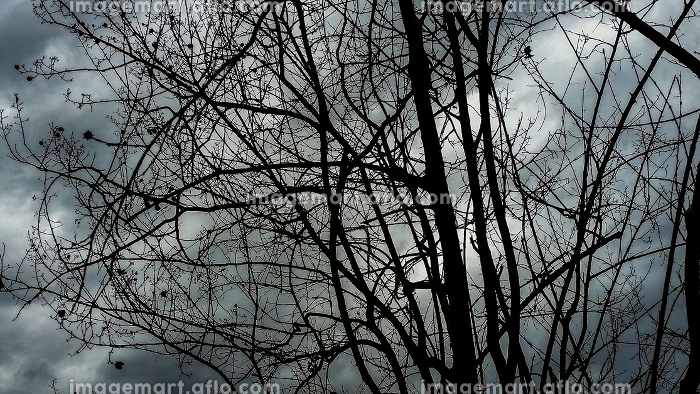 Bare branches under a cloudy skyの販売画像