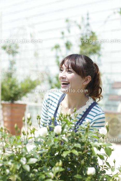 バラの咲く庭でガーデニングを楽しむ女性の販売画像