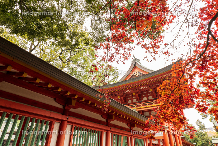 晩秋の神社の風景 12月の販売画像