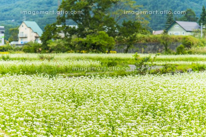 蕎麦畑の販売画像