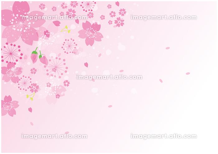 桜 花びら 春 背景の販売画像
