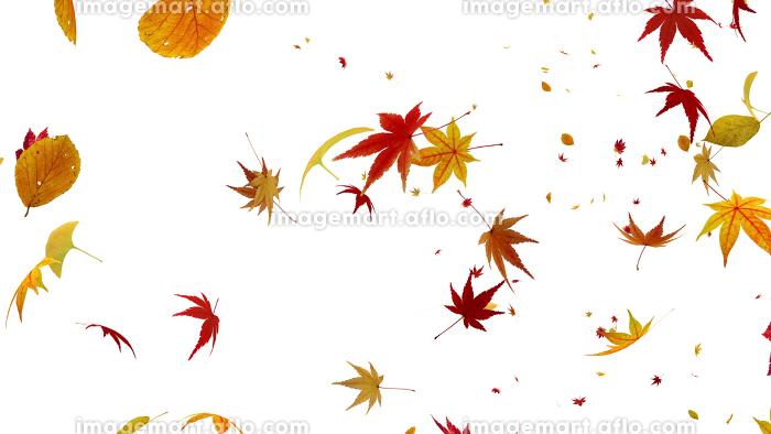 紅葉 落葉 秋 オータム 舞う 葉 エコロジー 緑 CG 3D イラスト 背景 バックグラウンドの販売画像