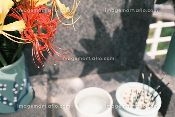彼岸花とお墓に供えられた線香の販売画像