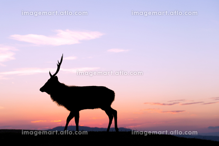 Deer Buck on highland with sunset