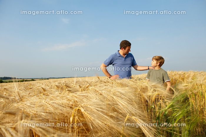Father and son in a wheat fieldの販売画像