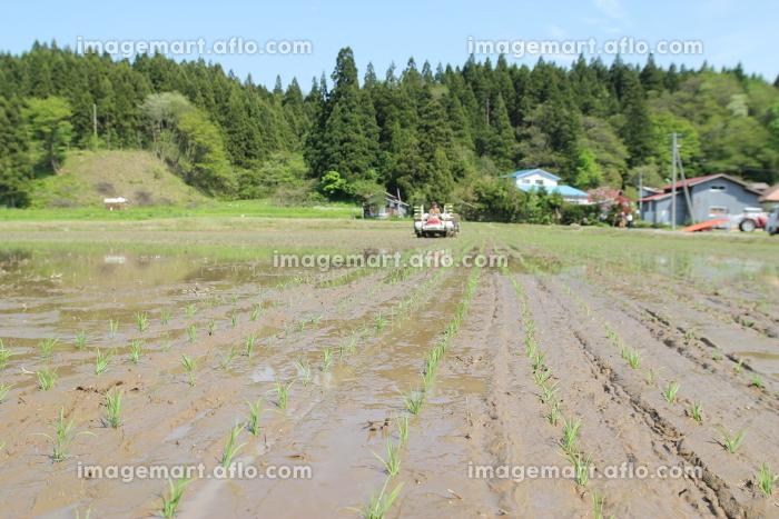 田植え,田舎,田んぼの販売画像