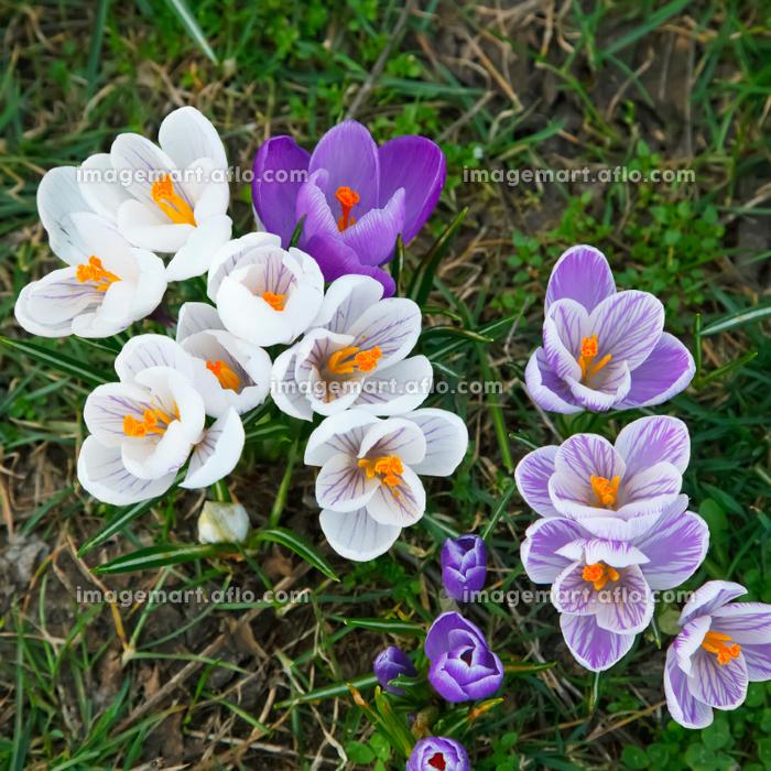 色 公園 花の販売画像