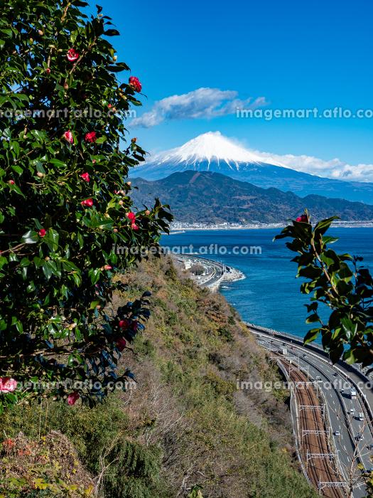 静岡県 椿の花に囲まれた隙間から見える富士山と薩埵峠の風景 12月の販売画像