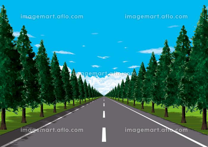 平野の真っ直ぐな並木道の販売画像