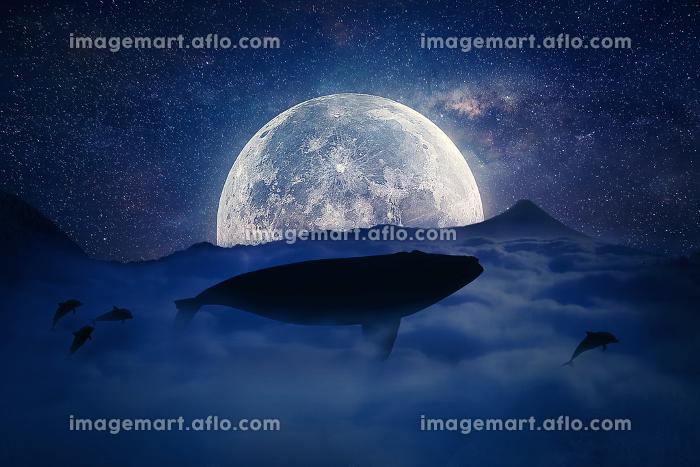 flying whaleの販売画像