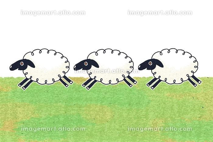 3匹の羊 イラストの販売画像