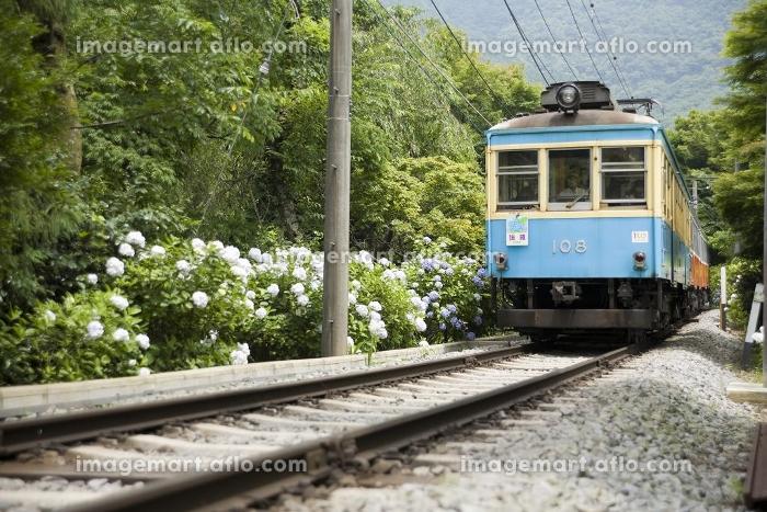 あじさい電車