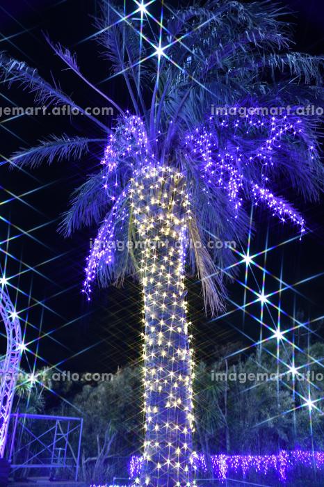 江の島ライトアップの販売画像