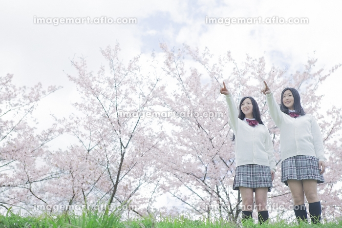 桜をバックに指差す高校生の販売画像