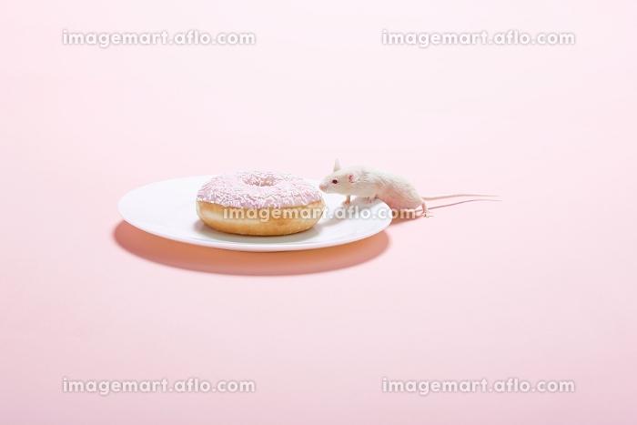 ドーナツとネズミの販売画像