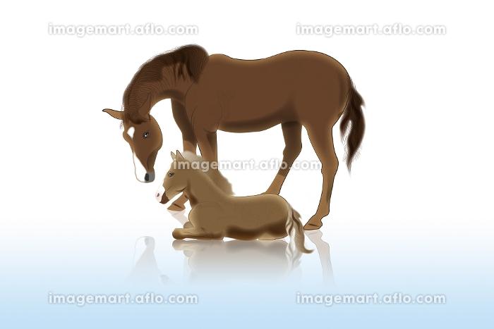 馬の親子 イラストの販売画像