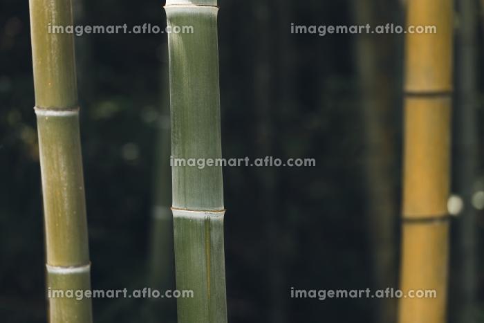 夏の木漏れ日と竹林の販売画像