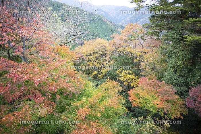 高尾山登山道から見た景色の販売画像
