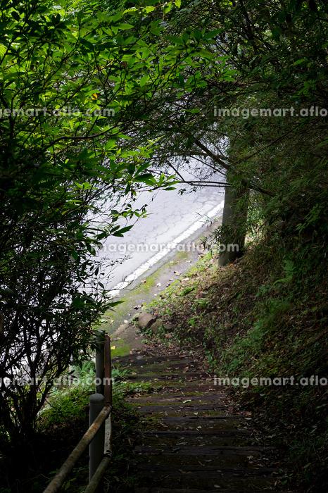 山道から見えるアスファルトの道の販売画像