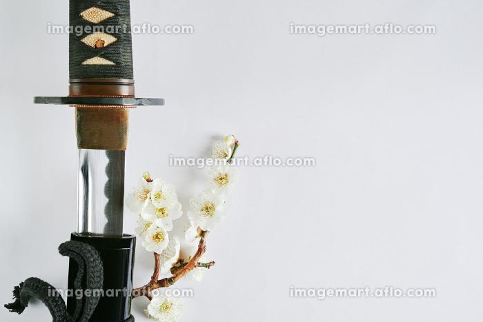 白い背景に少し抜いた日本刀と白い花が咲いた梅の枝の販売画像