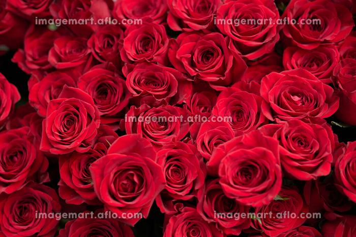 結婚や恋愛をイメージした真っ赤バラの花束の販売画像