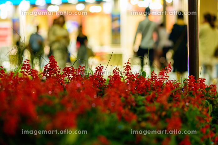 夜の街角の美しい花の販売画像