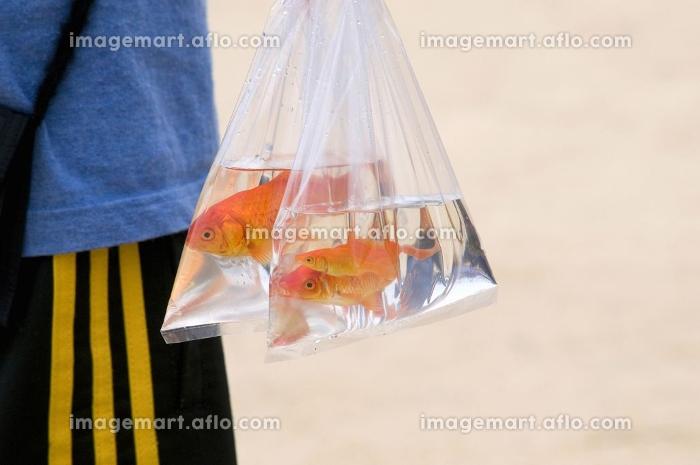金魚すくいの販売画像