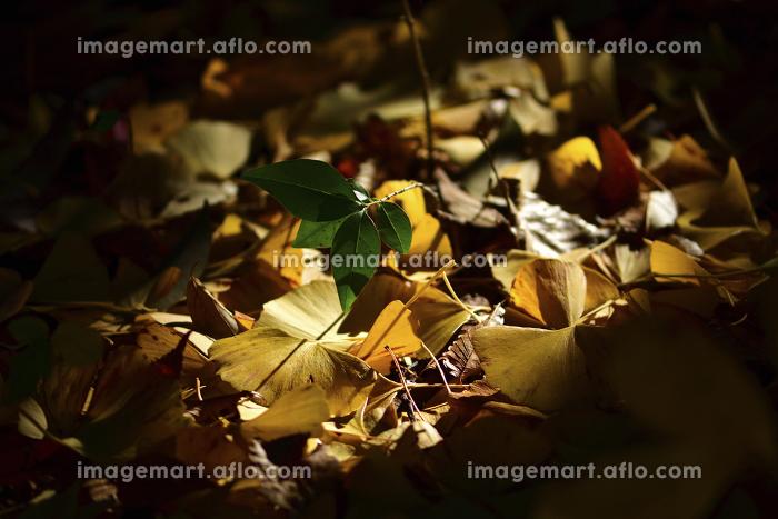 木洩れ日の販売画像