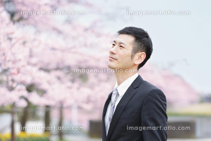 桜とスーツを着た日本人男性の販売画像