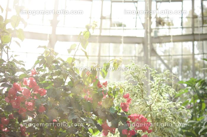 ガーデンの販売画像