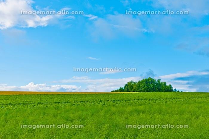 北海道の大自然の草原