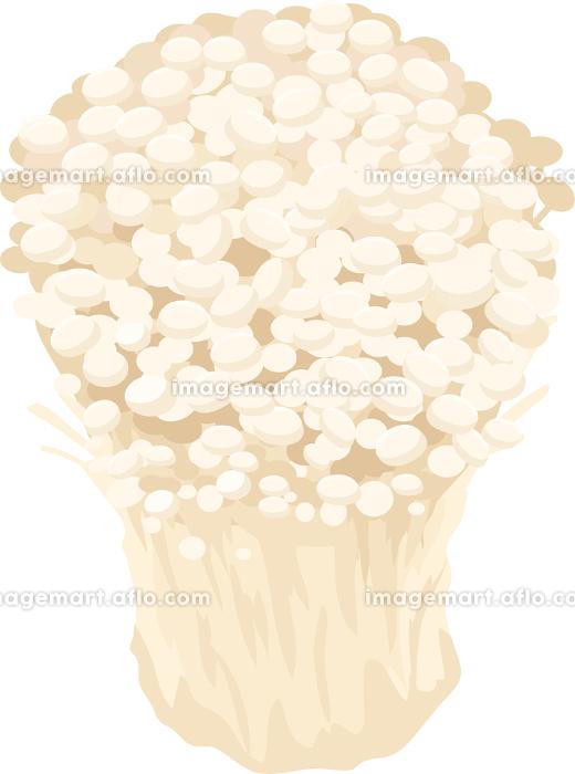 イラスト素材 えのきだけ エノキ きのこ キノコ 秋 料理 ベクターの販売画像