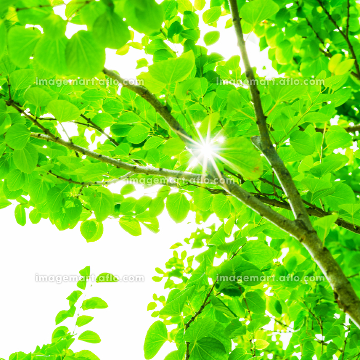 太陽光 再生可能エネルギー 【 カーボンニュートラル イメージ 】の販売画像
