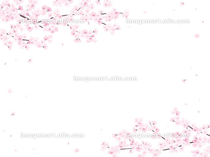 満開の桜 フレーム・背景素材(横向き)の販売画像