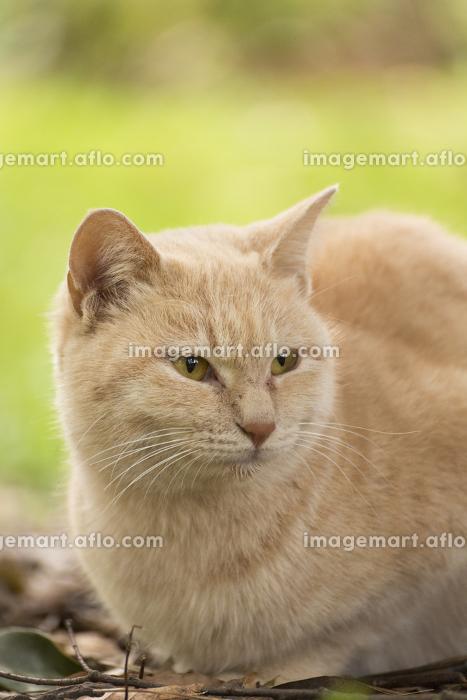 草むらでたたずむ野良猫の販売画像