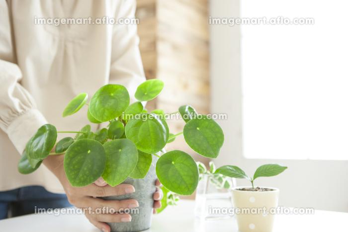 鉢植えを持っている女性の販売画像