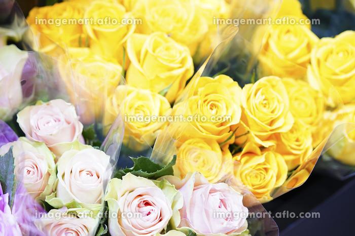 薔薇の販売画像