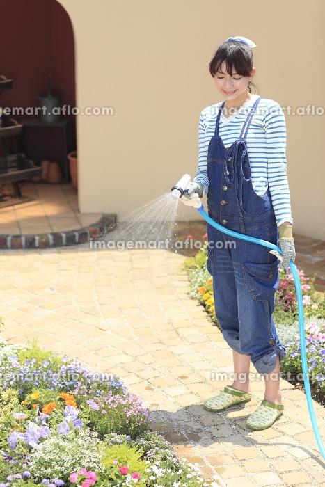 庭の花に水やりをする女性