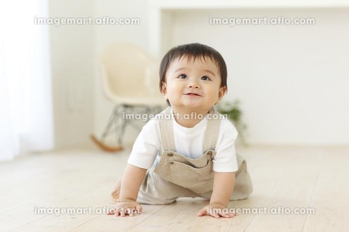 フローリングのリビングでハイハイする赤ちゃんの販売画像