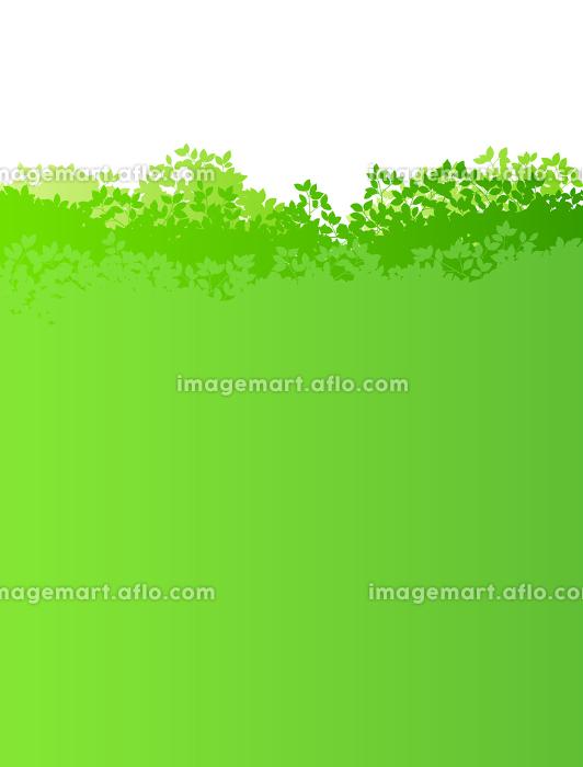 新緑イメージ 背景素材の販売画像